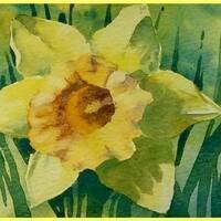 Daffodil Time