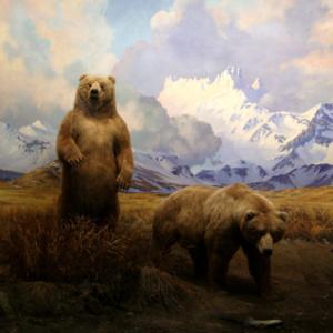 Bear - A Public Screen by Deke Weaver