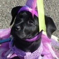GEB Puppy Fashion Show!