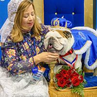 Beautiful Bulldog Contest