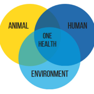 Antimicrobial Resistance – A One Health Approach to a Growing Problem