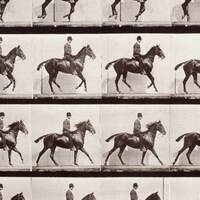 Exhibition: Science in Motion: The Photographic Studies of Eadweard Muybridge, Berenice Abbott and Harold Edgerton