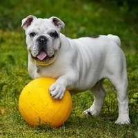 Play & Learn with Dogs!