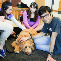 Bark Buddies at Norlin Library
