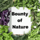 Bounty of Nature: Planting from Scraps