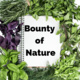 Bounty of Nature: Worm Farm & Composting