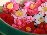 Camellia Display