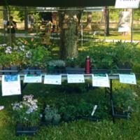 Constance Ranson Native Plant Sale