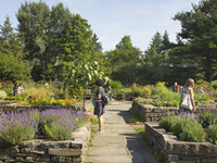 Summer Solstice in the Herb Garden