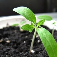 Make and Take: Seed Starting