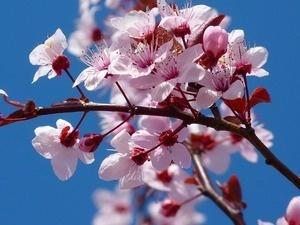 Buford Spring Festival