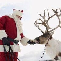 Santa & His Live Reindeer