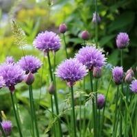 Planning & Planting a Herb Garden