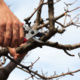 Tree & Shrub Pruning Class