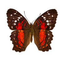 Unearthed: Composers Kristina Dutton & Lisa Schonberg Premiere Original Scores for Smithsonian Archive Butterfly Research Films