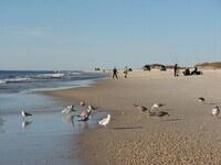 National Volunteer Week Special - Pick It Up! Coastal Cleanup