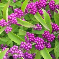 UD Botanic Gardens Spring Plant Sale Preview