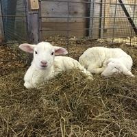 CANCELLED - Little Lamb Nursery
