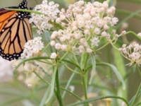 Celebrate Earth Day by helping pollinators thrive at the Walker River State Recreation Area