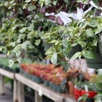 Horticulture Club Spring Plant Sale