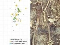 """Maite Iris García Collado """"Diet and mobility in early medieval Iberia: New insights from stable isotope analyses"""""""