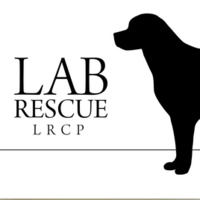 Adopt a Lab Day at PetSmart in Towson