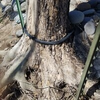 GICES: Trees and Irrigation
