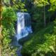 INTO OSU Silver Falls Hiking Trip