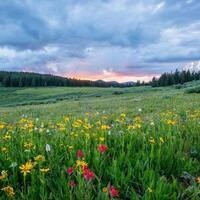 Naturalist Night: Meadow Stewardship with Grey Hayes
