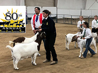 Nevada Junior Livestock Show and Sale
