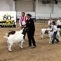 Nevada Junior Livestock Show and Sale