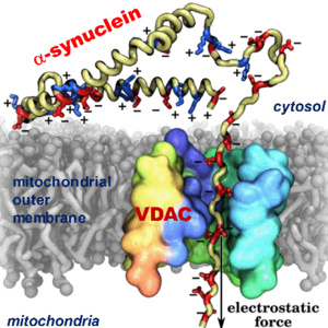 Physics & Astronomy Seminar: VDAC as a Global Regulator of Mitochondrial Metabolism:  Its Role in Cancer and Neurodegeneration