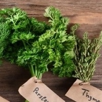 Herbs: From Seed to Seasoning - Smith Center