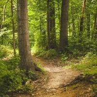 Gopher-a-Walk (Forest Bathing)