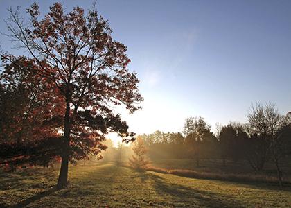Sep 15, 2019: Sunday Arboretum Tours at F.R. Newman Arboretum