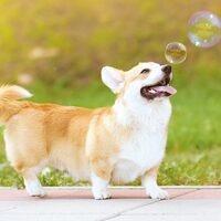 De-Stress Week: Puppies and Bubbles