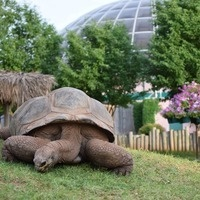 """Herd of Turtles"" Makes Debut at Reptile Gardens"