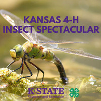 Kansas 4-H Insect Spectacular