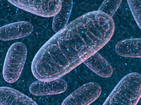 Mitochondria control physiology and disease: Beyond ATP