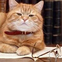 Study Night at the Cat