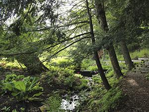 Sunday Arboretum Tours - Ithaca Events