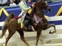 JD Massey Horse Show
